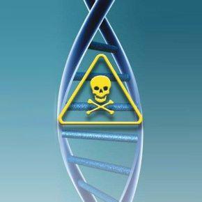 Contaminantes químicos estimulan lafeminización