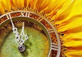 La cronobiologia, la importancia de vivir en sincronía con los ciclosnaturales